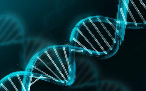 La genetica en la actividad agropecuaria