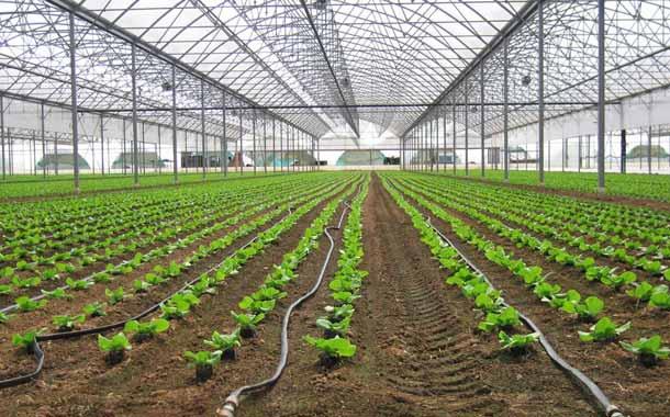 La frecuencia de riego en cultivos en invernadero y campo abierto