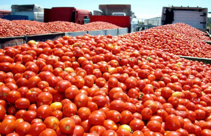 Maduracion de tomates con etileno