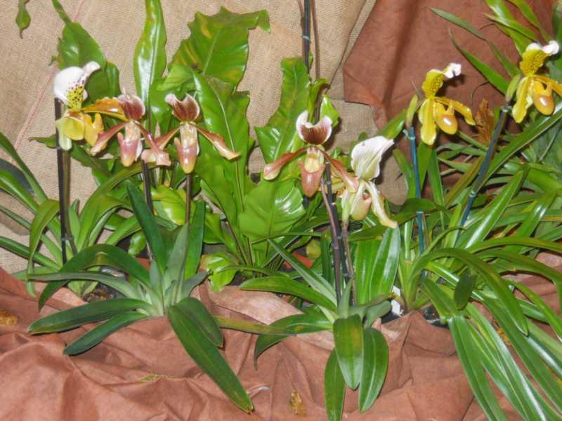 Cuidado de Orquideas: Como cruzar las flores