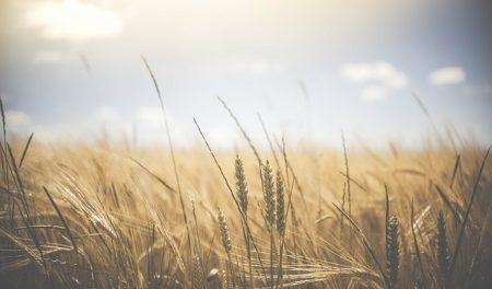 La agricultura desde una perspectiva ecológica