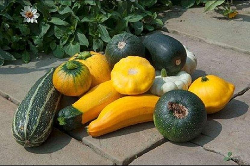 vegetales huerta