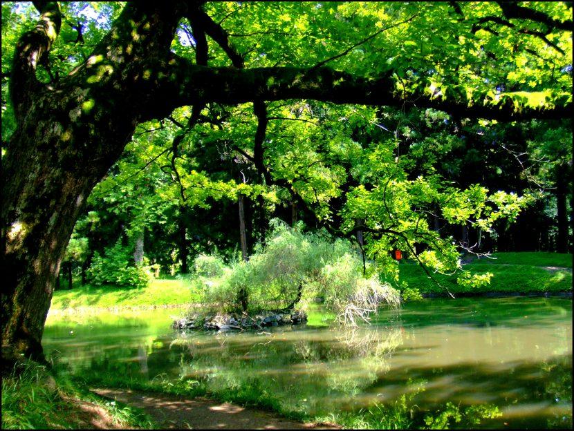 Árbol de sombra
