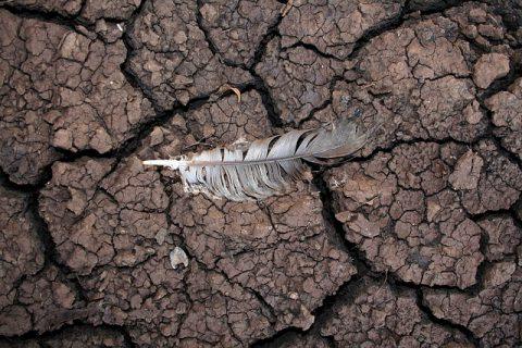 Degradación de suelos agrícolas: tipos y causas