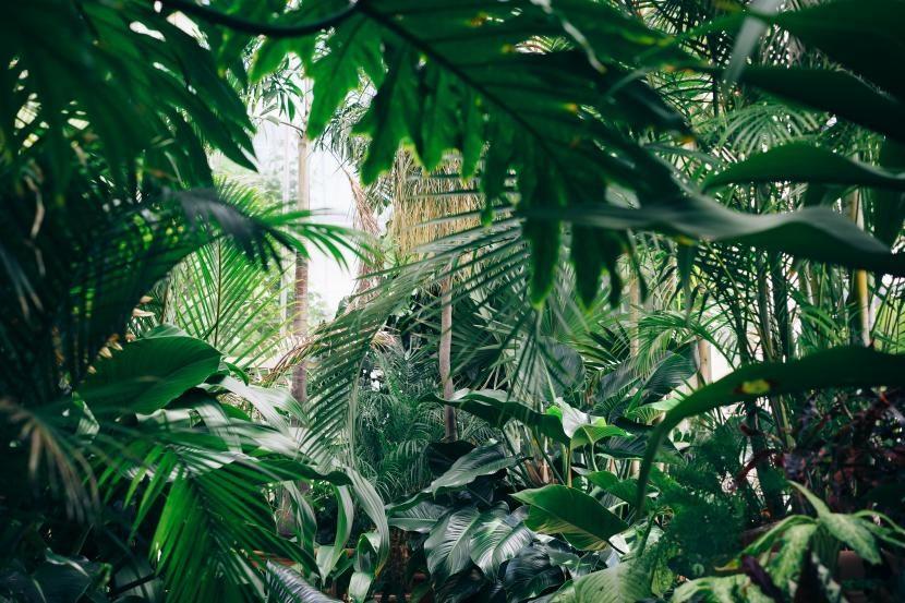 Jardín tipo jungla