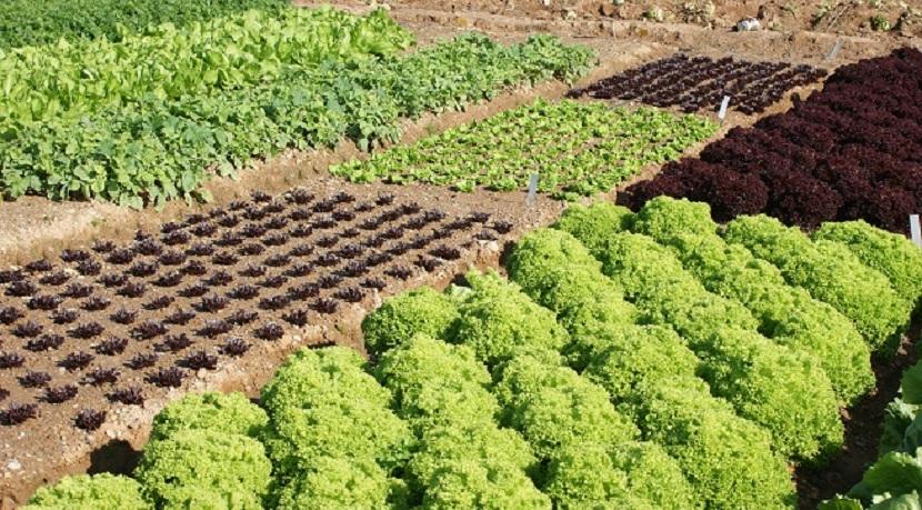 rotación de los cultivos
