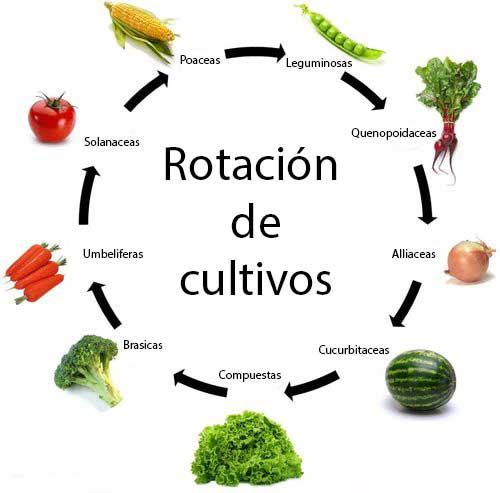 rotacion cultivos