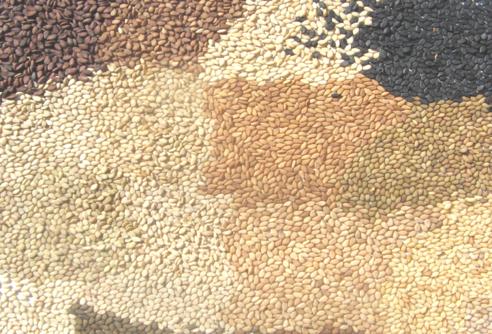 La importancia estratégica de la semilla en los procesos agrícolas