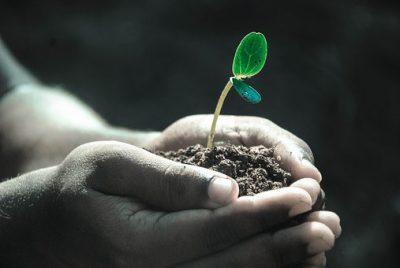 El suelo y sus procesos formadores