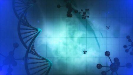 Organismos genéticamente modificados en la agricultura, o cultivos transgénicos: ¿por qué la polémica?