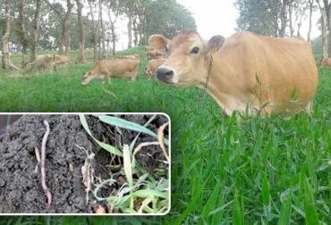 biocenosis en la ganadería, organismos benéficos en la ganadería, organismos para el control ecológico de plagas, CONtexto ganadero