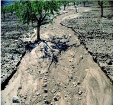 Conservación de suelos: prácticas culturales