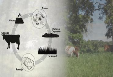ciclo natural de la ganadería, ganadería sostenible, ganadería amigable con el medio, fertilizantes natural en la ganadería, materia orgánica, fauna edáfica, CONtexto ganadero
