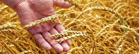 La domesticación de las especies y la agricultura