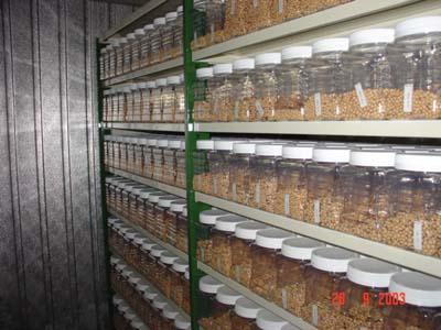 Los recursos fitogenéticos