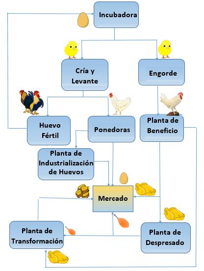 La cadena de valor en la industria avicola