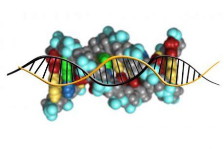 ADN, genes, alelos y cromosomas: entendiendo la unidad de la herencia