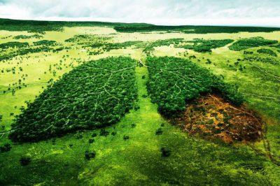 La conservación de suelos: prácticas agronómicas (parte II)