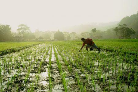 El cambio climático y la productividad de los cultivos