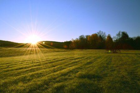 Fotosíntesis y agricultura