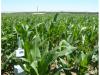 Monitorización del contenido de humedad del suelo (EFI-RIEGO)