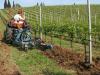 Manejo de malezas en viñas