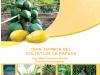 Guia Tecnica del cultivo de la papaya