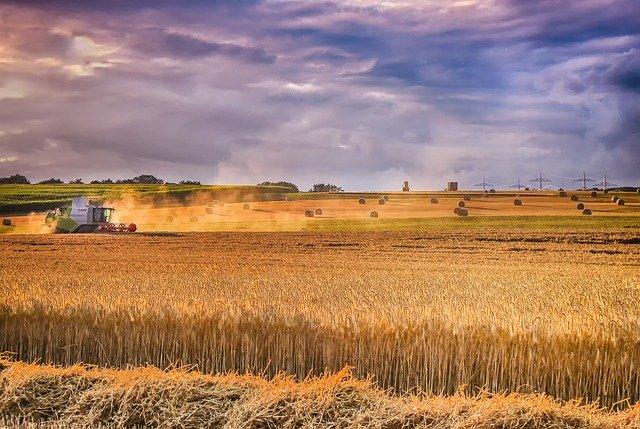 ¿Qué puede hacer un ERP por mi empresa agrícola?