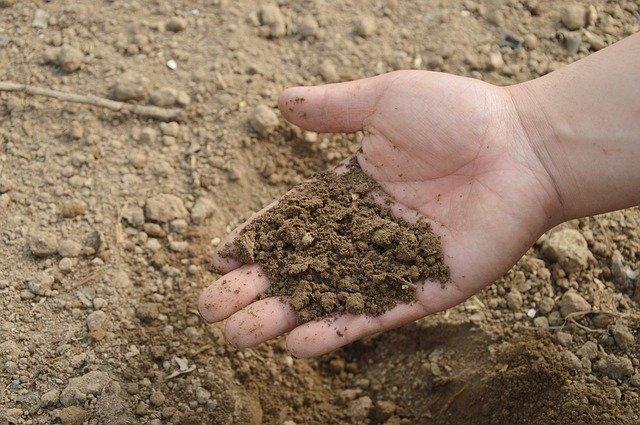 Servicio de interpretación de análisis de suelo y plan de fertilización