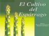 Cultivo de Esparrago