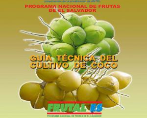 Frutales Coco Produccion Vegetal Cultivos Agricolas