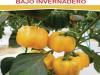 Manual de produccion de pimiento en invernadero