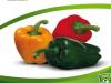 Nutrición Vegetal en Pimiento