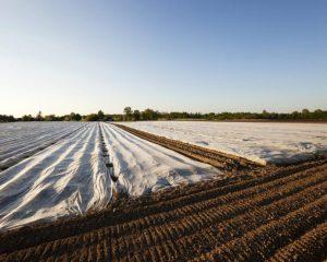Desinfeccion natural del suelo