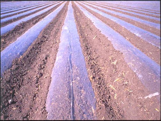 Solarizacion desinfeccion de suelos agricolas