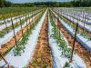 La Solarización del Suelo: Procedimiento y Beneficios