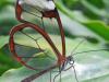 Las alas de mariposa inspiran la superficie que manipula la luz para los implantes médicos