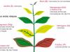 Principales deficiencias nutritivas en plantas y su diagnosis: Una guía visual