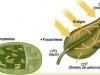 Por qué más dióxido de carbono puede no conducir a cultivos más productivos