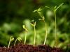 Fertilizantes del futuro: los bioestimulantes ayudan a los cultivos en condiciones climáticas adversas