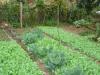 Huerto de traspatio, sustentable y saludable