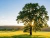 """Científicos revelan que los árboles también tienen un """"palpitar"""" por las noches"""