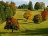 Pequeños árboles ornamentales que crecen en la sombra