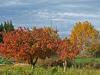 ¿Se puede abonar en otoño?
