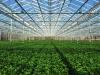 Invernadero: Conceptos fundamentales