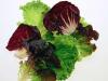 Efectos positivos de la aplicación de radiación UV-B en las características antioxidantes de lechuga Baby verde y roja