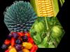 Algarroba  – Necesidades nutricionales y Papel de los nutrientes y Extracciones en el cultivo