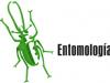 Uso de insectos como fuente proteica en la alimentacion animal