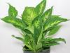 Plantas de sombra, especies perfectas para jardines con poca luz