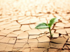Cómo afecta la falta de humedad a las plantas